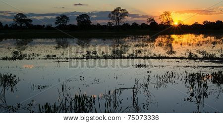 Sunset in pantanal wetlands with pond and ipe trees