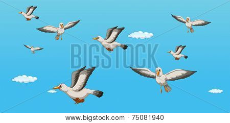 illustration of seagulls flying in the sky