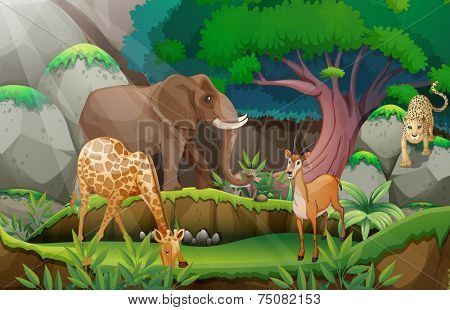 Illustration of animals in the jungle