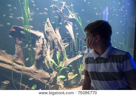 The boy in Oceanarium considers fish