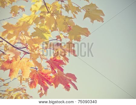 Autumn leaves with a retro filter effect