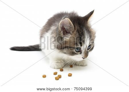 Little Kitten Eats A Dry Food Isolated On White Background