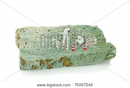 A Slice of Moldy Bread
