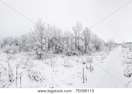 Fresh snowfall in the wilderness