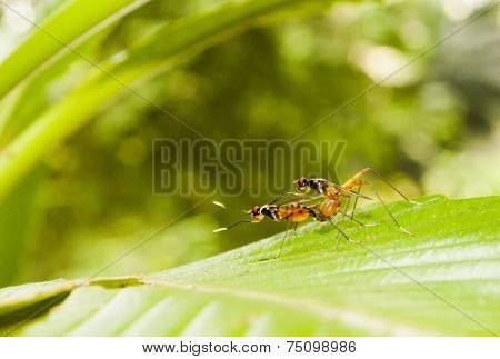 Ants Mating In Green Background