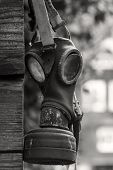 picture of outdated  - Outdated gasmask on a wooden wall in black white - JPG