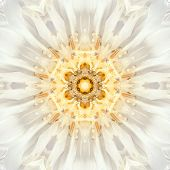 pic of kaleidoscope  - White Mandala of Cornflower Flower Center Close - JPG
