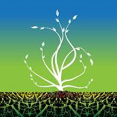 picture of photosynthesis  - Abstract colorful illustration with a solitary white plant shape growing from a dry soil - JPG