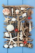 stock photo of driftwood  - Sea shell and driftwood abstract collage on wooden blue background - JPG