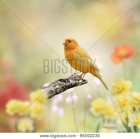 Yellow Bird Perched In The Garden