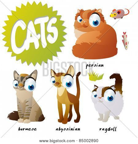 vector cartoon cat set breeds: persian, burmese, ragdoll, abyssinian
