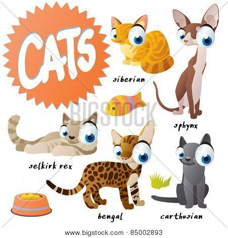 vector cartoon cat set breeds: sphinx, siberian, carthusian, bengal, selkirk rex