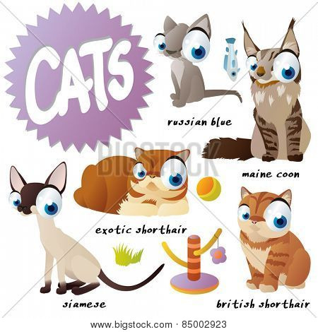 vector cartoon cat set breeds: russian blue, maine coon, siamese, exotic shorthair, british shorthair