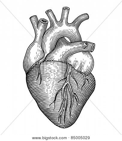 Engraving vector heart isolated on a white backgrounds.