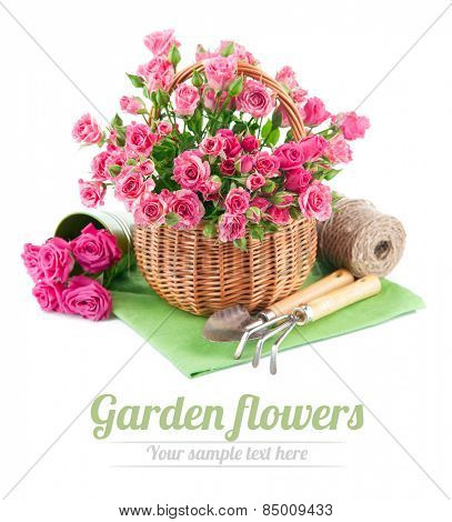 Bunch pink roses in basket with garden tools. Isolated on white background
