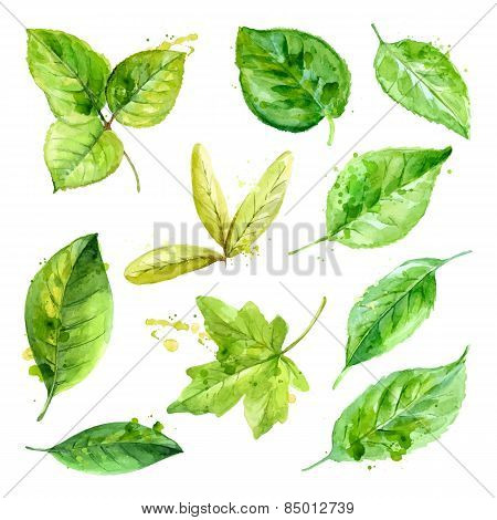 Set Of Spring Leaves Watercolor With Blots Of Paint. Vector Illustration