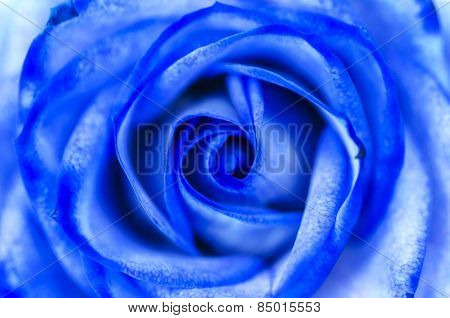 Abstract Blue Rose