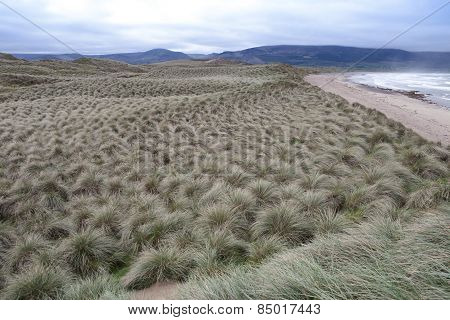View Of Dunes At The Maharees