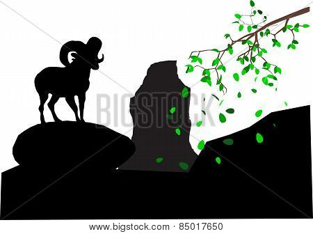 Argali In Rocks