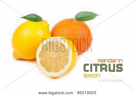 Citrus: tangerine, lemon on a white background