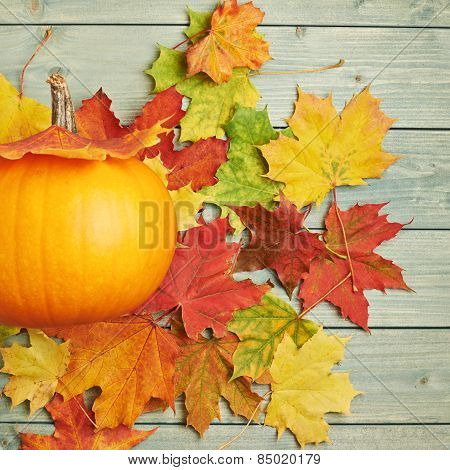Orange pumpkin and maple leaves composition