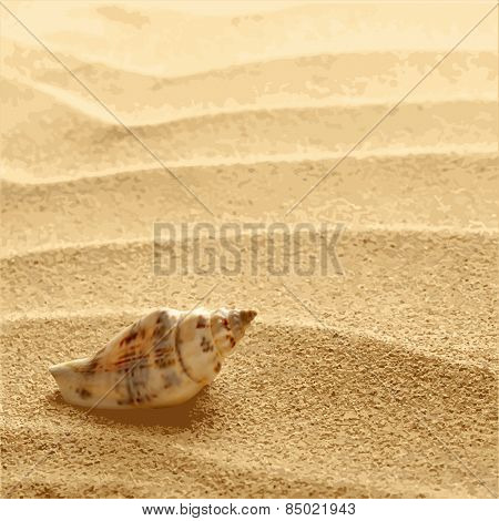 sea shells with sand as background vector EPS8