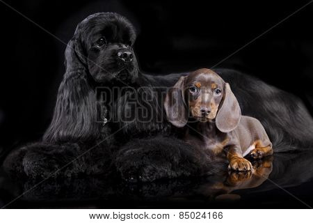 dogs sitting in front of black background