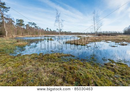 Marshy Nature Area In Belgium