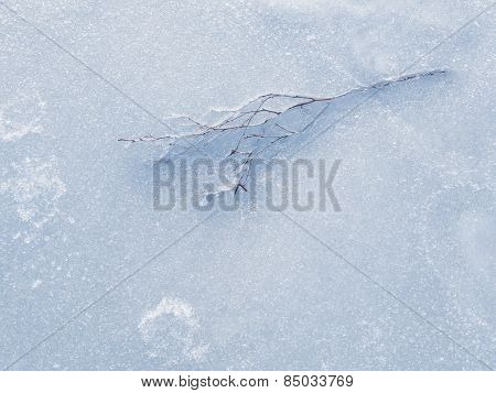 Tree Branch Frozen In The Ice