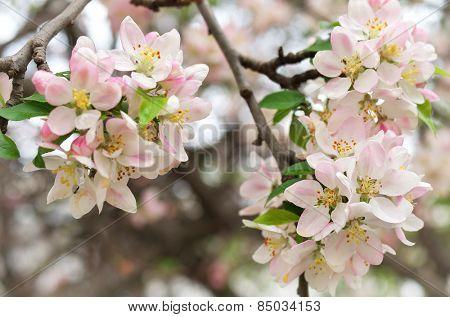 Spring leaf of apple tree. Nature composition.
