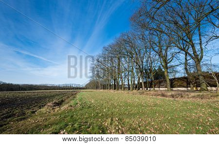 Farmfield In Wintertime  With A Row Of Bare Trees