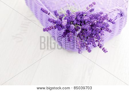 basket full of lavende - flowers and plants