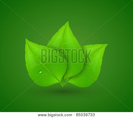 Green leaves with drops of water. Eco Concept. Vector illustration.