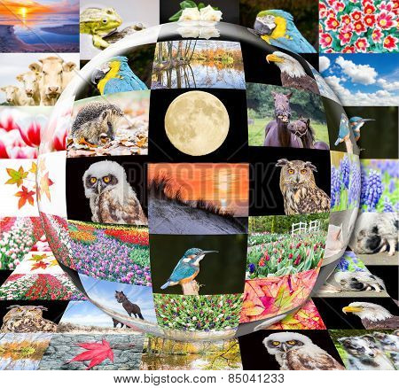 Glass sphere reflecting contact sheet of nature images
