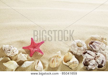 Shells in sand.