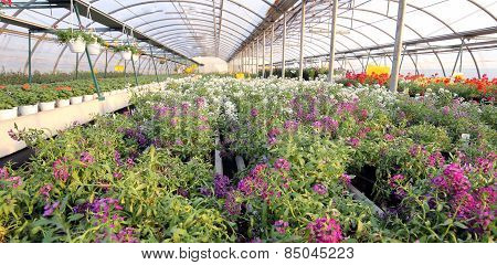 Greenhouse With A Lot Of Flowers And Plants For Sale In The Spring