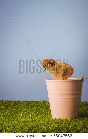 Stuffed chick in pink bucket on green grass
