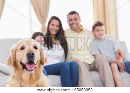 Happy family of four looking at Golden Retriever in living room