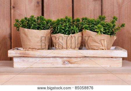 Wrapped flower pots on stand on tabletop on wooden background