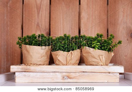 Three wrapped flower pots on stand on tabletop on wooden background