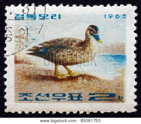 Postage Stamp North Korea 1965 Spot-billed Duck, Bird