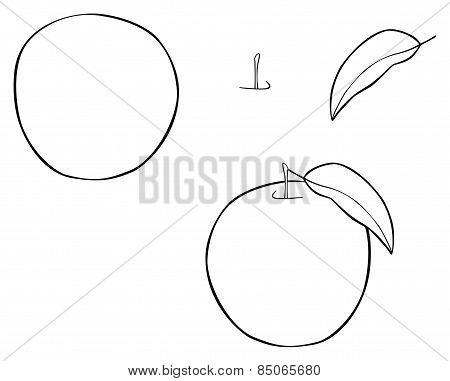 Delightful Garden - Nice Round Apple With One Leaf