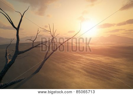 An image of a desert sunset with a dead tree in the sand