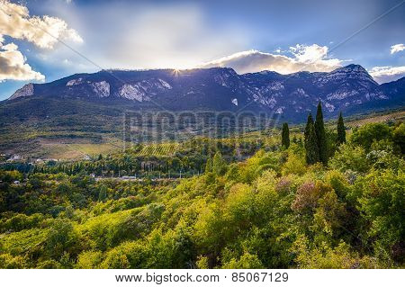 Mountain slopes and grape in Crimea
