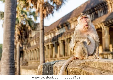 monkey portrait, angkor wat, cambodia, in background