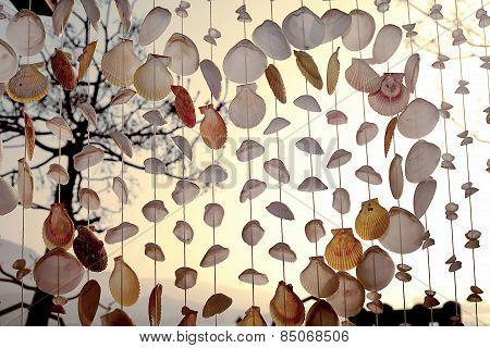 Sea Shells Seashells