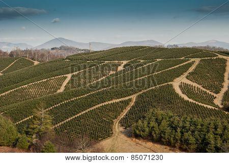 Christmas Tree Farm In Western North Carolina