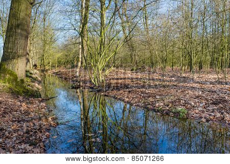 Small Stream In A Forest Reflects The Bare Branches Of The Trees
