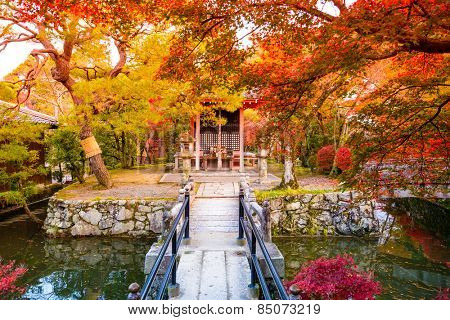 Fall foliage in Kyoto, Japan.