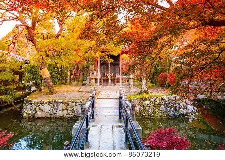 Fall foliage in Kyoto, Japan.